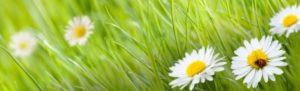 obraz z kwiecistą łąką