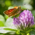 zdjęcie w formie obrazu - motyl na kwiecie