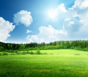 fotoobraz z łąką