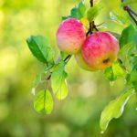 owoce na zdjęciu